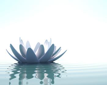 Sedation Dentistry Lotus'