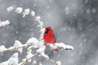 Birds use a lot of energy to stay warm during cold winds
