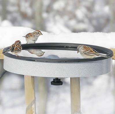 Birds Rely on Fresh Water from Heated Birdbaths'