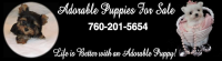 Adorable Puppies for Sale Logo