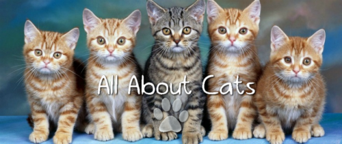 all about cats'