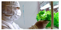 CAN CLOUD GROWN LETTUCE HELP ALLEVIATE POVERTY?