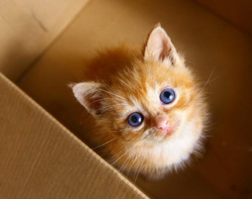 Adorable kitten'