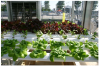 UK IKEA ROLL OUT HYDROPONICS SYSTEM'