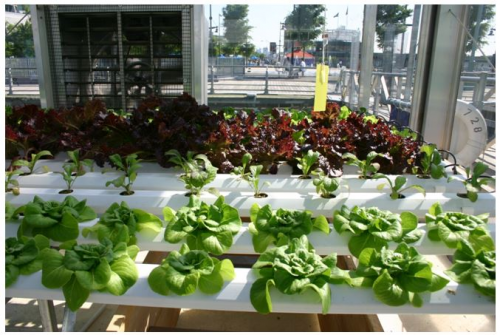 IKEA IN THE UK SOON TO ROLL OUT HYDROPONICS SYSTEM: GROWN UP'