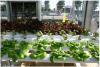 GROWN UP HYDROPONICS OPEN DAY FOR NATIONAL VEGETABLE SOCIETY'