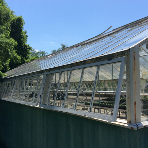 Before picture of outside of greenhouse'