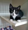 WildBlueMissouri Kitten1'