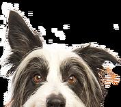 GoDoggyLove.com Logo
