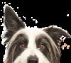 Company Logo For GoDoggyLove.com'