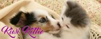 KiwiKittie.com Logo