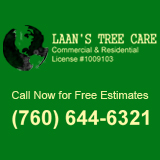Company Logo For Laan's Tree Care'
