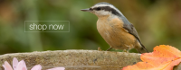 BirdBathsPro.com Logo