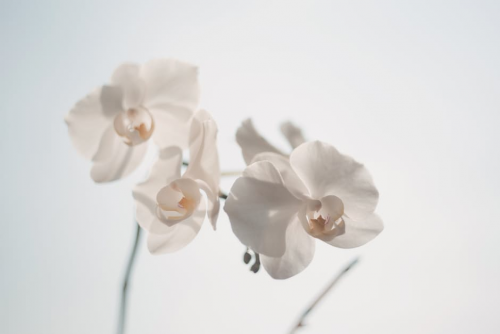 White Flower'