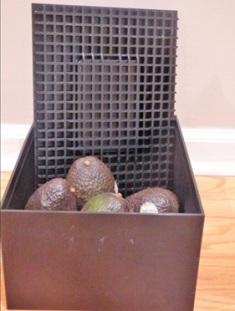 Avocado Ripening Box'