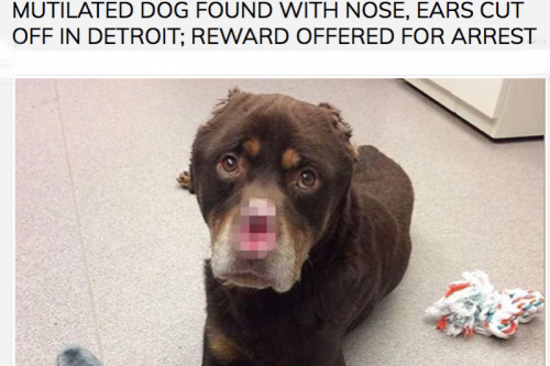 Justice for Baron Detroit Dog That Was Tortured and Mutilate'