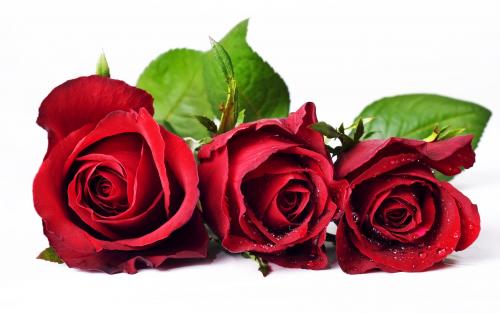 Send Flower To Philippines'
