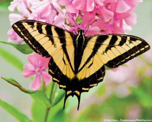 yellowbutterfly-pinkflowers'