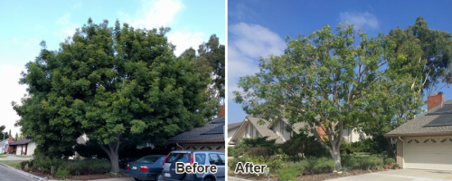 tree trimming services'