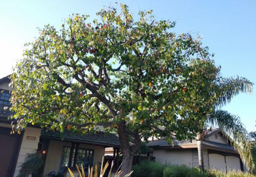 tree care'