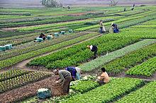 Agricultural Biologicals'