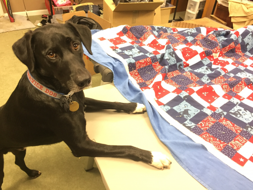 Service Dog with Wounded Warrior Quilt'