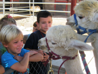 Upcoming Helen Woodward Animal Center Youth Day with ISF