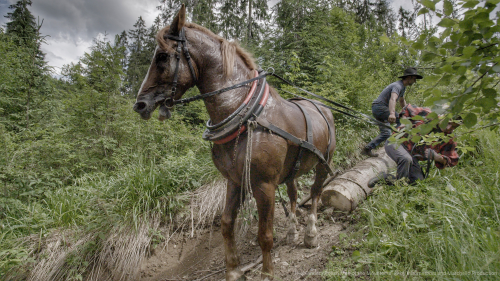 Highlander - lumberjack 2'
