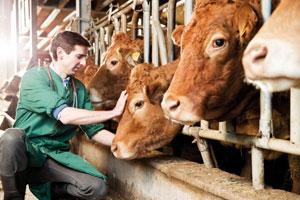 Animal Health Industry'
