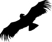 Condor Publishing, Inc. Logo