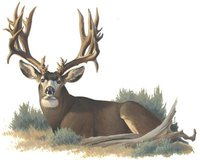 Trail Blaze Hunting Consultants Logo