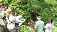 4-Day Gorilla Express out of Kigali