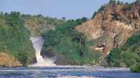 12-Day Best of Uganda with Murchison Falls, Gorillas, Chimps