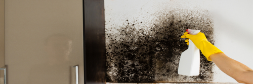Company Logo For Mold Remediation Hobe Sound'