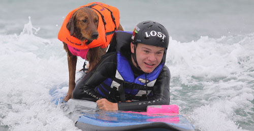 Dog surfing with adaptive surfer'