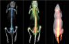 Small Animal Imaging Market'