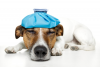 Veterinary Pain Management Market'