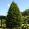 Evergreen Privacy Trees'