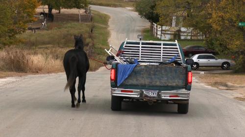 OSMTX horse'
