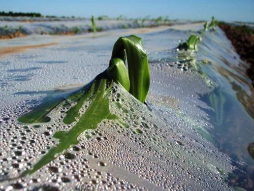Biodegradable Plastic Mulches Market'