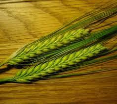 Wheat Grass Powder Market 2018'