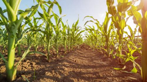 Agricultural MicronutrientsMarket'