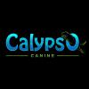 Calypso Canine