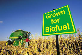 Global Biofuels Market Size Study, by Type'