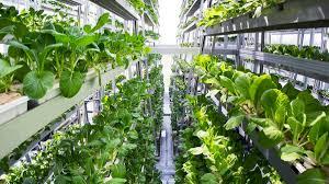 Vertical Farming, Plant Factory'