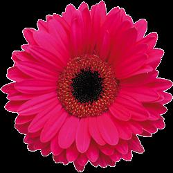 flowers4 logo'
