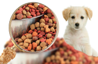 Global Pet Raw Food Market Status and Outlook