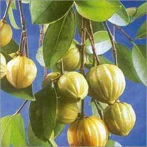 Garcinia Fruit'