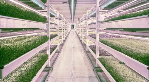 Vertical Farming Market'