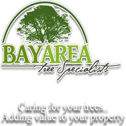 Company Logo For Bay Area Tree Specialists'